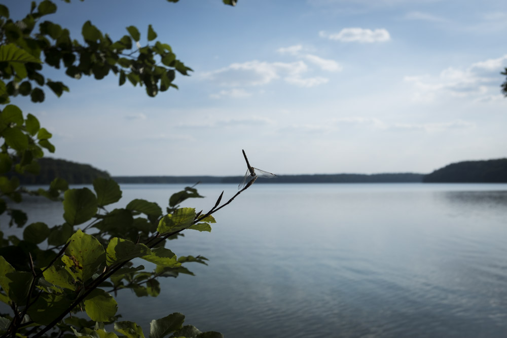 Stechlinsee_01